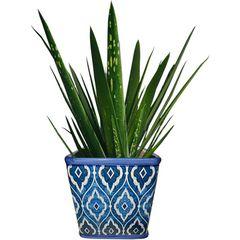 Cachepot-de-Ceramica-Azul-Tile-Marrocan-Pequeno-Urban