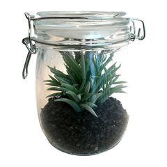 Vaso-de-Vidro-Aloe-Cactus-Urban