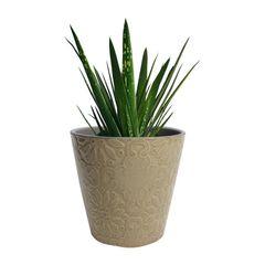Vaso-de-Ceramica-Bege-Colen-Urban