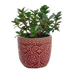 Cachepot-de-Ceramica-Vermelho-Hearts-Urban