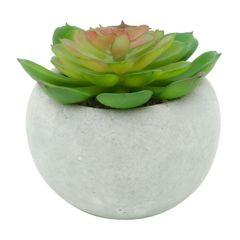 Vaso-de-Cimento-Branco-com-Planta-Carnicolor-Urban-080245.jpg