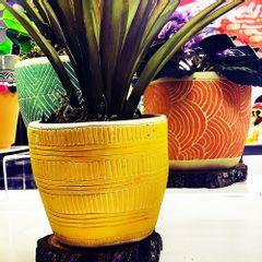 vaso-de-cimento-amarelo-modern-design-urban