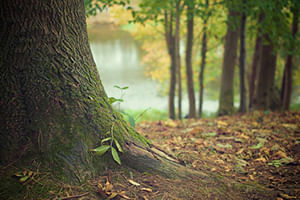 Preservamos a Natureza